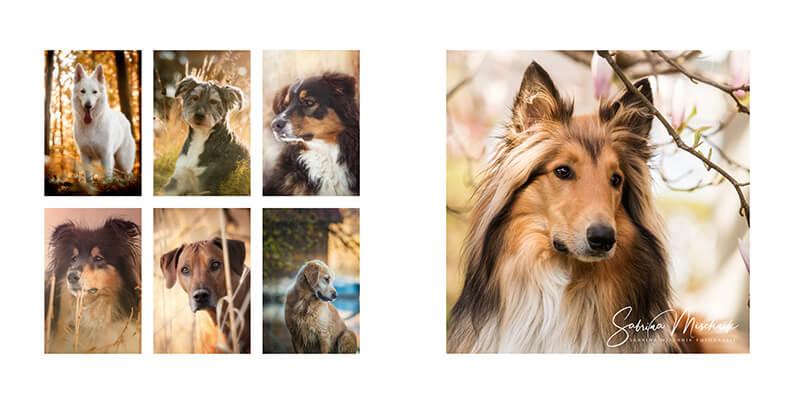 Dog photography photo album ideas
