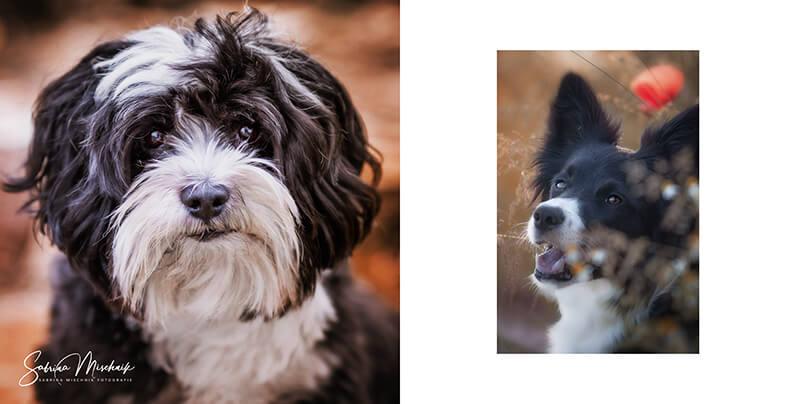Dog photography photo album