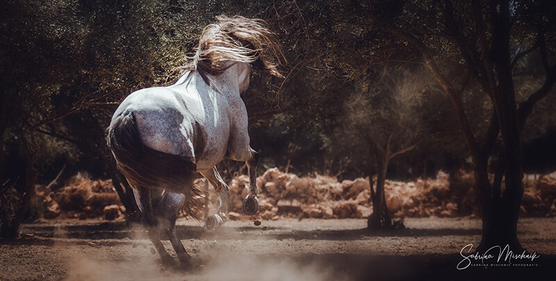 Equestrian photography 2