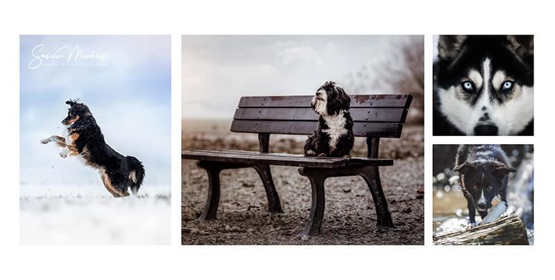 Pet photography photo album ideas