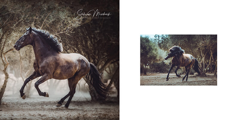 Pferdefotografie Design-Ideen Fotoalbum fuer professionelle Fotografen nPhoto