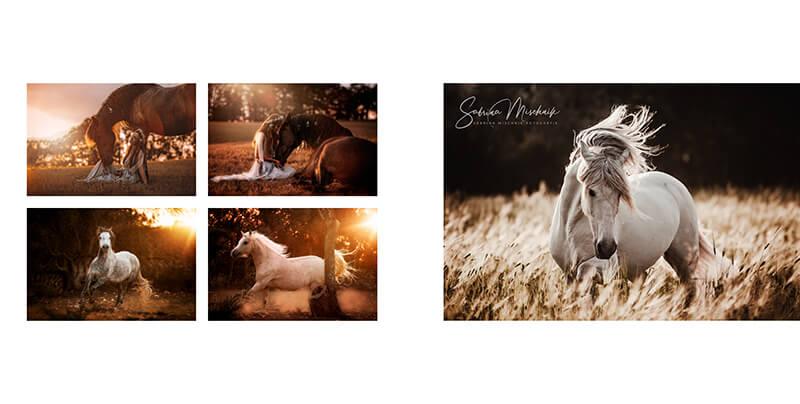 Pferdefotografie professionelle Fotoprodukte nPhoto