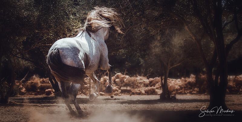 Pferdefotografie Lay-Flat Fotoalbum professionelle Fotografen nPhoto