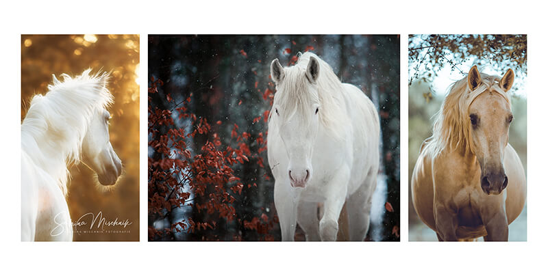 Professionelle Pferdefotografie Fotoprodukte Fotoalben von nPhoto
