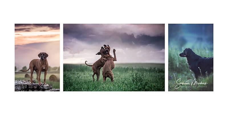 Hundefotografie professionelle Fotoprodukte fuer Hundefotografen nPhoto