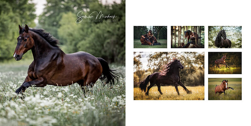 Professionelle Pferdefotografie Alben fuer professionelle Fotografen nPhoto