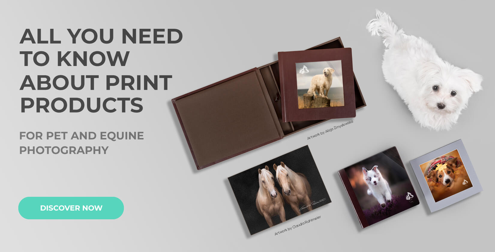 pet photography business professional photo products